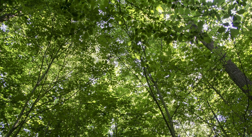 Δάσος της Βουλώνης (Bois de Boulogne) , Παρίσι, Γαλλία , Ευρώπη