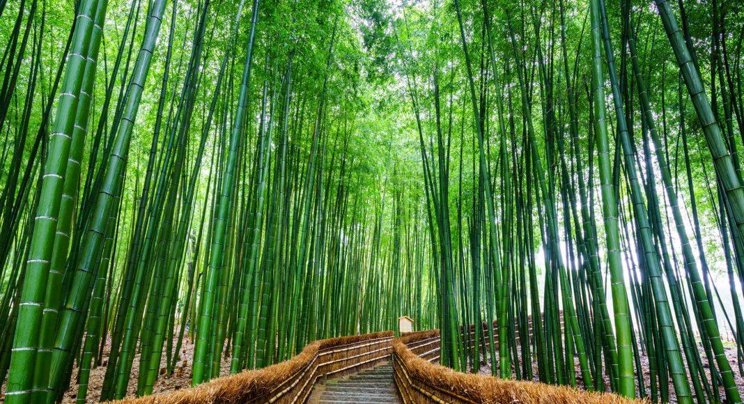 Αρασιγιάμα (嵐山 (Arashiyama)) , Κιότο, Ιαπωνία, Ασία