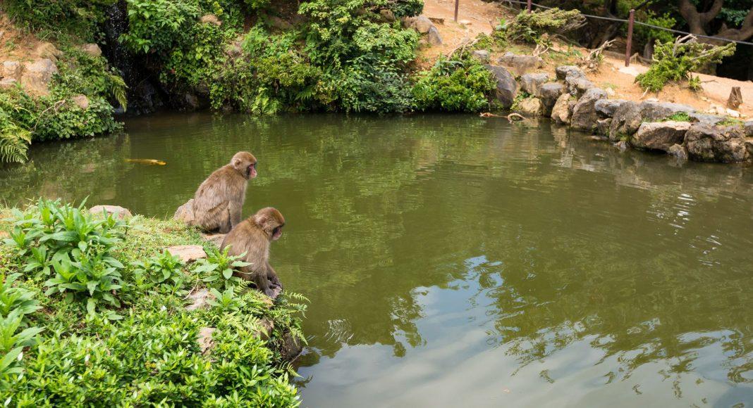 Πάρκο Μαϊμούδων Ιγουαταϊάμα (嵐山モンキーパーク (Arashiyama Monkī Pāku)) , Κιότο, Ιαπωνία, Ασία